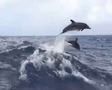 dolphin video Done_1