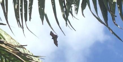 Bat - large bat
